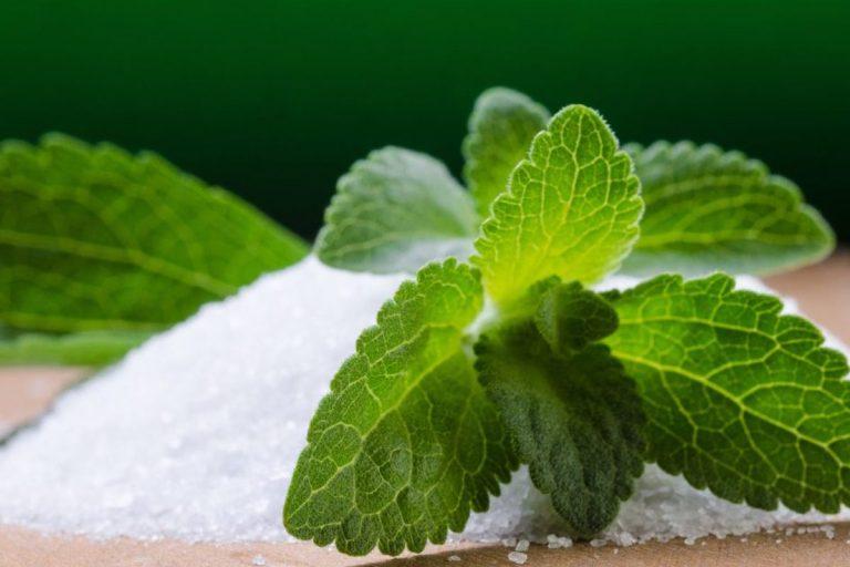 Stevia ravitsemus tosiasiat: Side Effects, edut ja muuta..