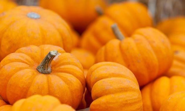 Польза тыквы для здоровья и нарушение питания